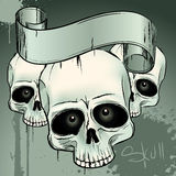 Crani Immagini Stock