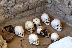 Crani antichi fotografia stock