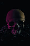 Crani di lerciume Immagine Stock