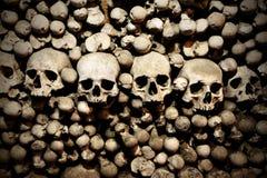 Crani ed ossa Immagine Stock