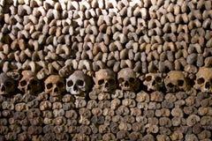 Crani ed ossa fotografia stock libera da diritti