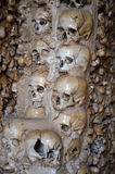 Crani ed ossa Fotografia Stock