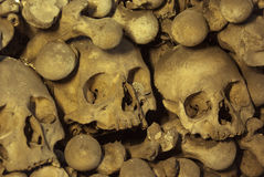 Crani ed ossa immagine stock libera da diritti
