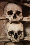 Crani umani Immagini Stock