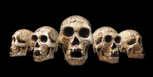 Crani umani messi Immagine Stock Libera da Diritti