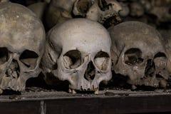 Crani umani reali come fondo Immagini Stock Libere da Diritti