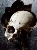 Cranio 4 Fotografie Stock