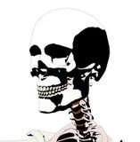 Cranio 5 royalty illustrazione gratis