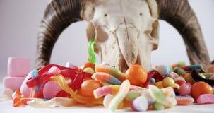 Cranio animale e varie caramelle contro fondo bianco 4k archivi video