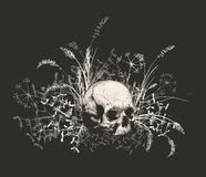 Cranio circondato da un campo di erba Fotografia Stock Libera da Diritti
