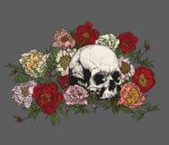 Cranio circondato dalle peonie Fotografie Stock