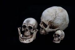Cranio con fondo nero Immagine Stock