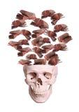 Cranio con i libri di volo Fotografia Stock