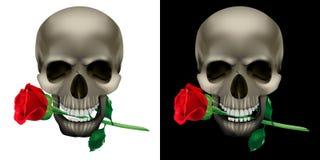 Cranio con una rosa nei denti Fotografie Stock