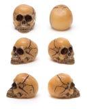 Cranio, da sei prospettive Fotografie Stock Libere da Diritti