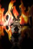Cranio dei cervi Fotografia Stock Libera da Diritti