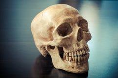 Cranio dei cervi sulla tavola Fotografia Stock Libera da Diritti