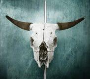 Cranio del Bull fotografia stock libera da diritti