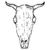Cranio del Bull (vettore) Fotografia Stock