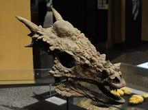 Cranio del drago Fotografie Stock