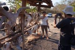 Cranio del toro Fotografie Stock Libere da Diritti