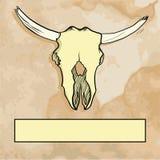 Cranio del toro con l'etichetta Fotografia Stock Libera da Diritti