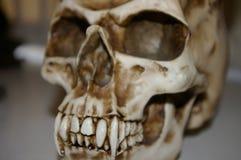Cranio dell'ornamento Fotografia Stock