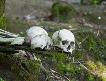 Cranio della gente di Kete Kesu Fotografie Stock Libere da Diritti