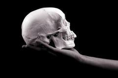 Cranio della holding della mano Fotografia Stock