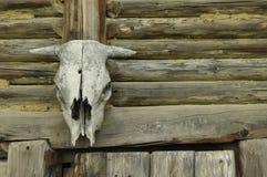 Cranio della mucca che appende sopra la porta Fotografia Stock
