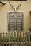 Cranio della mucca sopra la finestra con le imposte Fotografie Stock Libere da Diritti