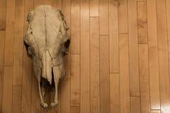 Cranio della mucca su un fondo di legno Fotografie Stock Libere da Diritti