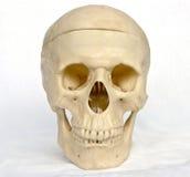 Cranio della persona 5 Fotografie Stock Libere da Diritti