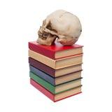 Cranio della persona e del libro Immagine Stock Libera da Diritti
