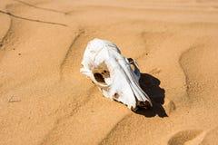 Cranio delle pecore nella fine della sabbia fotografia stock