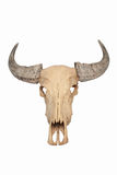 Cranio di Bull isolato Immagini Stock
