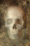 Cranio di Grunge Fotografia Stock