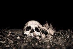 Cranio di Lightpainted Fotografie Stock Libere da Diritti