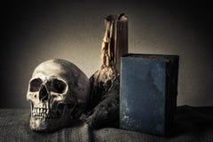 Cranio di natura morta Immagine Stock