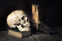 Cranio di natura morta Fotografia Stock