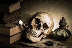 Cranio di natura morta Fotografia Stock Libera da Diritti