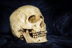 Cranio di natura morta Immagini Stock