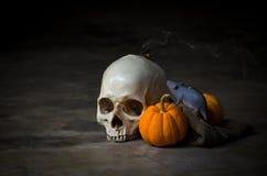 Cranio di natura morta con la zucca, il ratto ed il fumo gialli Immagini Stock