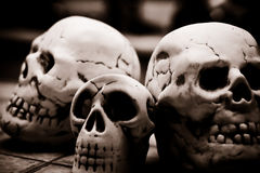 Cranio di sapience di omo Immagine Stock
