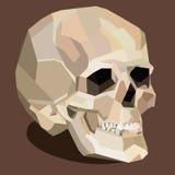 Cranio di vettore sui precedenti marroni illustrazione vettoriale