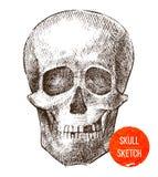Cranio disegnato a mano Fotografia Stock Libera da Diritti