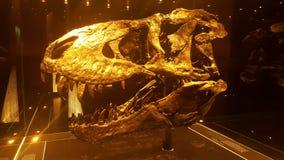 Cranio dorato di T-Rex Immagini Stock