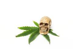 Cranio e foglia verde della cannabis Fotografia Stock