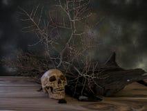 Cranio e piante asciutte 1 fotografia stock