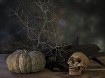 Cranio e piante asciutte 2 immagine stock libera da diritti